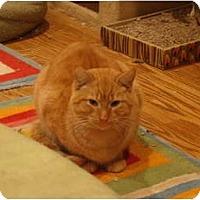 Adopt A Pet :: Harry--PETSMART - Muncie, IN