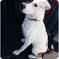 Adopt A Pet :: Bubbles - Omaha, NE