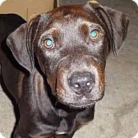 Adopt A Pet :: Ted - Houston, TX