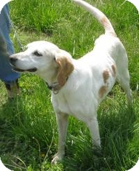 Foxhound Mix Dog for adoption in Mineral, Virginia - Missy