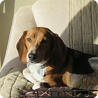 Adopt A Pet :: Salt - Yardley, PA