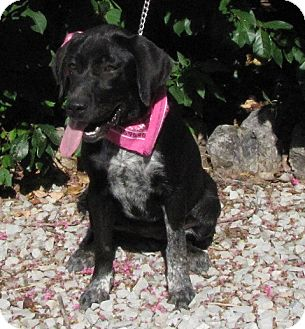 Labrador Retriever Mix Dog for adoption in Oakland, Arkansas - Lucille