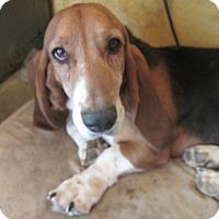 Adopt A Pet :: Chuck - Albuquerque, NM