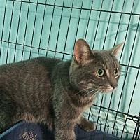 Adopt A Pet :: Smokey - Monroe, CT