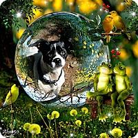 Adopt A Pet :: Penny - Crowley, LA