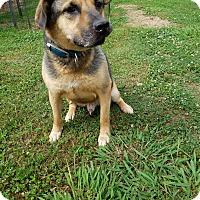 Adopt A Pet :: Fido - Kittery, ME