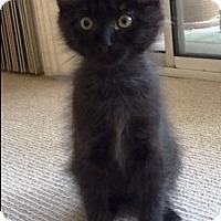 Adopt A Pet :: Fred - Orange, CA