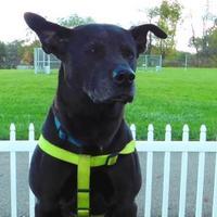 Adopt A Pet :: Jasmine - Louisville, OH