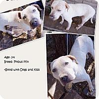 Adopt A Pet :: Jamie - Phoenix, AZ