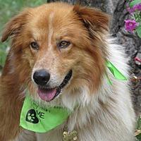 Adopt A Pet :: Peppy - Kiowa, OK