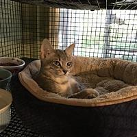 Adopt A Pet :: Miss Behavin' - Cypress, TX