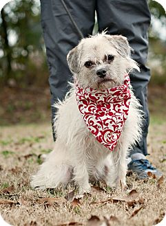 Terrier (Unknown Type, Small) Mix Dog for adoption in Portsmouth, Rhode Island - Gypsy