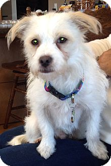 Terrier (Unknown Type, Small) Mix Dog for adoption in Lexington, Kentucky - Vince