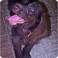 Adopt A Pet :: Bentley - dewey, AZ
