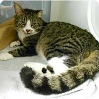 Adopt A Pet :: Buddy Boy - Maywood, NJ