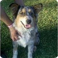 Adopt A Pet :: Snowflake - Bakersfield, CA