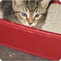 Adopt A Pet :: Fabien - Jacksonville, FL