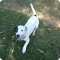 Adopt A Pet :: Hammy - Eden, NC