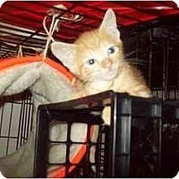 Adopt A Pet :: sunshine - Little Neck, NY