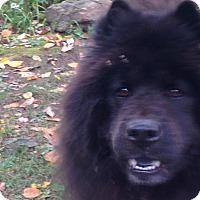 Adopt A Pet :: BEAR - Dix Hills, NY