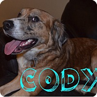 Adopt A Pet :: Cody - Homewood, AL