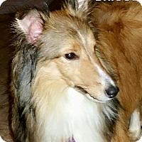 Adopt A Pet :: Briggs - COLUMBUS, OH