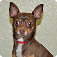 Adopt A Pet :: Finch - Port Washington, NY