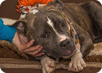 Terrier (Unknown Type, Medium) Mix Dog for adoption in Flint, Michigan - Tatum