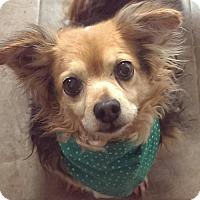 Adopt A Pet :: Pixel - Baltimore, MD