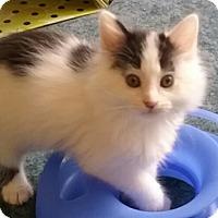 Adopt A Pet :: Cashew - North Highlands, CA