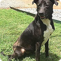 Adopt A Pet :: Cassie - Pottstown, PA