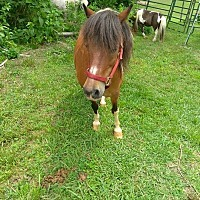 Adopt A Pet :: Merlot - Loudon, TN