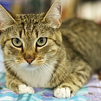 Adopt A Pet :: Baby Girl - Great Falls, MT