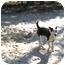 Photo 3 - Canaan Dog Mix Puppy for adoption in Ridgeville, South Carolina - Boo Boo