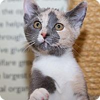 Adopt A Pet :: Dena - Irvine, CA