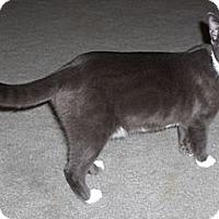 Adopt A Pet :: Misty - Richmond, VA