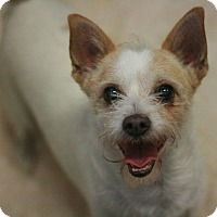 Adopt A Pet :: Katy - Canoga Park, CA