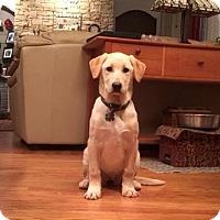 Adopt A Pet :: Faye - Cumming, GA