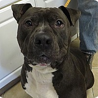 Adopt A Pet :: Shadow - Middletown, NY