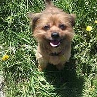 Adopt A Pet :: Gizmo *Special Needs* - Detroit, MI