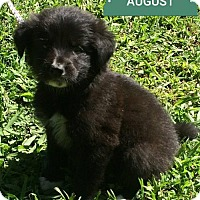 Adopt A Pet :: **AUGUST** meet July 8th - Mukwonago, WI