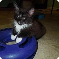 Adopt A Pet :: Pip - HILLSBORO, OR