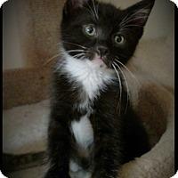 Adopt A Pet :: Bijou - Richmond, VA