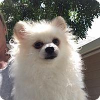 Adopt A Pet :: Cloud - Temecula, CA