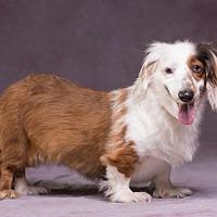 Adopt A Pet :: Millie - League City, TX
