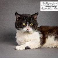 Adopt A Pet :: Tom-Tom - North Myrtle Beach, SC