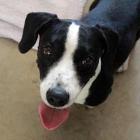 Adopt A Pet :: Vali - Waco, TX