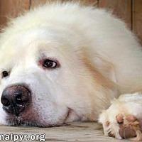 Adopt A Pet :: Polar - adopted - Beacon, NY