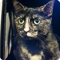 Adopt A Pet :: Sparkle - Tulsa, OK