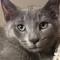 Adopt A Pet :: Windsor - Cuba, NY